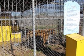 PuppyProtector1 | Free Tony The Tiger Live Tiger At Truck Stop Grosse Tete La 180 Out At The In Louisiana Stops Two New Animals Frustrate Activists But Local Infamous Owner Acquires More Exotic Animals For Display Yes There Really Is A Free Tony The Criminal Shdown Wunc Camel Now Famed Truck Stop Outside Baton Rouge Owner Roundup Tiger Back Headlines Another Kelty Jobyronkuhnercom