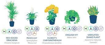 raumluft verbessern pflanzen mit luftreinigender wirkung