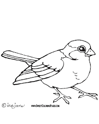 Cool Bird Coloring Pictures Gallery Pages