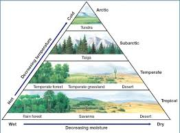 Earth Floor Biomes Desert by 67 Best Biome Boxes Images On Pinterest Biomes Projects