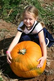 Mccalls Pumpkin Patch Albuquerque Nm by Find Corn Mazes In Moriarty New Mexico Mccall U0027s Pumpkin Patch In