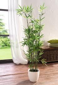 pflanze bambus