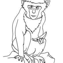 Kids With Wild Animals Coloring Pages