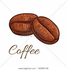 Coffee Beans Isolated Sketch Icon Vector Color Elements Of Tasty Roasted Whole Bean For