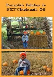 Pumpkin Patches Cincinnati Ohio Area by Patches In Nky Greater Cincinnati