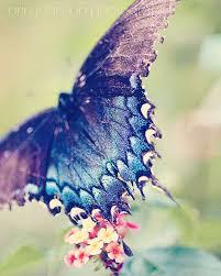 50 best Nursery Butterflies images on Pinterest