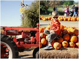 Rombachs Pumpkin Patch Hours by Running From The Law Pumpkin Patching