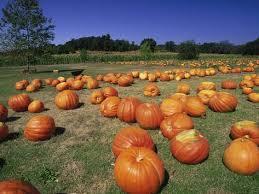Rombachs Pumpkin Patch Hours by Diamond Mo Pumpkin Patch Aurelio Tiene Un Problema Gordisimo