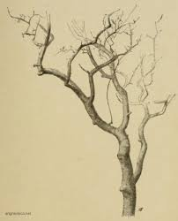 black thorn branches tree art