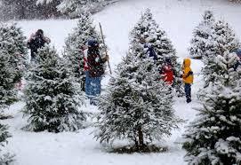 Eustis Christmas Tree Farm by Old World Christmas Ornaments Old World Christmas Christmas Ideas