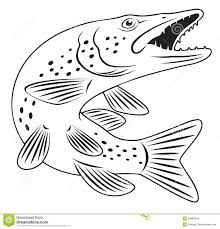Northern Pike Fish Coloring Page