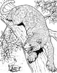 Cheetah Coloring Book Pages