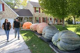 Nekoosa Pumpkin Fest 2017 by These Growers Like Pumpkins Jacked Up To Giant Proportions Misc