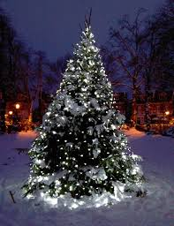 White Lights On Snowy Tree