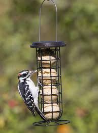 Clinger Suet & Seed Ball Feeder