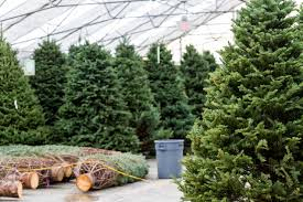 Christmas Tree Species Canada by Holiday Hacks To Keep Your Real Christmas Tree Fresh All Season