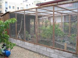 Amazing 26 Backyard Aviary Ideas On - RdcNY Google Image Result For Httpaussiefinchbreedcomphotogallery Parrot Aviary Outdoor Sale Net Avaries Birds Button Quail Aviary A View From My Summerhouse Macaw And Pigeon Youtube Recent Backyard Chickens Amazoncom Omitree Large Pet Cage Cockatiel Conure The Rescue Report The Old Lady Pigeons Retirement Home Building A Flight Or Coz Amazing 26 Backyard Ideas On Rdcny Best Price On Hotel In Siem Reap Reviews