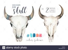 Decorated Cow Skulls Australia by Cow Skull Western Stock Photos U0026 Cow Skull Western Stock Images