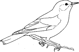 Blue Bird Coloring Pages Free