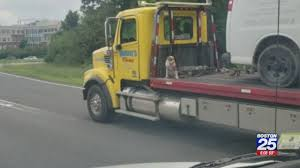 100 Do You Tip Tow Truck Drivers Truck Driver Fired After Dog Seen Chained To Truck