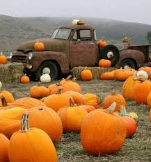 Pumpkin Patch Houston Oil Ranch by 356 Best Fall The Pumpkin Patch Images On Pinterest Hay Maze