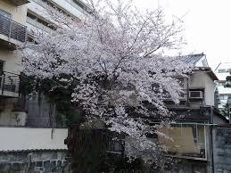 chambre r馼abilit馥 のぶかつの部活動 since 1970 ふぇてぃかつ feti files 1