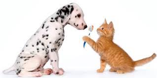 cat dental care post
