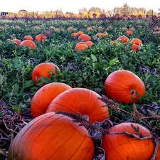 Pumpkin Picking Richmond Hill by Where To Celebrate The Fall Harvest In Bc Explore Bcexplore Bc