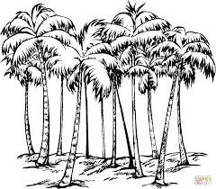 Some Of Coconut Palms Coloring Page Within Palm Tree