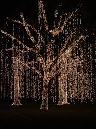 How To Put Christmas Lights On A Tree Outside Diy Pretty If I Ever Married
