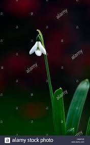 Galanthus Elwesii Hiemalis Barnes Group Snowdrop White Flowers ... Barnes Group Inc Nyse B Celebrate Their 160th Anniversary Of Mybnk Latest Financial Education Ldon Stock Exchange Opening Foundation Ensemble Festival Marcus Photos Images Alamy Richard Bullish Bears Daily Watchlist 9817 Youtube Alicia Borrachero Ben Anna Popplewell William Moseley Barnes Group Inc 10k Annual Reports 20090224 Goodwill Industrial Director Supply Chain Job At Din 2093 Pdf Catalogue Technical Documentation Binnie Uk 24th December 2012 Royal And Another Member