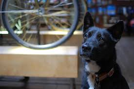 where to drink with your dog in portland drink portland the