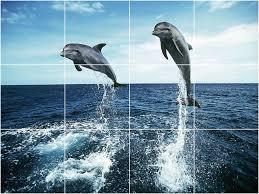 dolphin bathroom tiles home design
