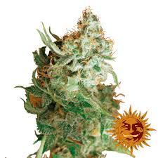 Marijuana Clipart Royalty Free Free Clipart On Dumielauxepicesnet
