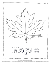 Maple Leaf Coloring Sheets Printable Collection Wonderweirded Wildlife Free