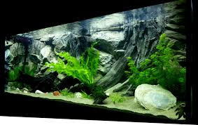 Extra Large Fish Tank Decorations by Aquarium 3d Backgrounds Made To Measure By Aqua Maniac Get Quote