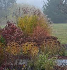 Beautiful grasses in John s New Jersey Garden FineGardening