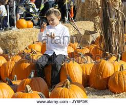 Shawns Pumpkin Patch Los Angeles Ca by Kingston Rossdale At Shawn U0027s Pumpkin Patch Culver City Los