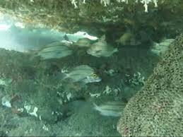 bathtub reef stuart youtube