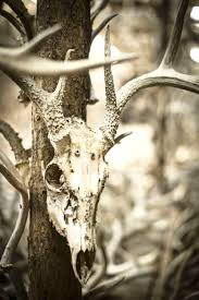 Shed Hunting Utah 2014 by Shed Madness The Antler Man And His Cathedral Of Bone Field