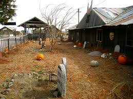 Old Auburn Pumpkin Patch by 8 Exceptional Bay Area Pumpkin Patches U2013 Weekend Del Sol