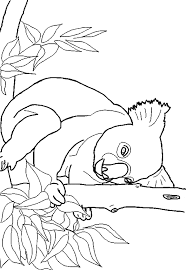 Free Koala Coloring Page