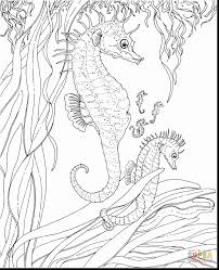 Fantastic Adult Ocean Coloring Pages Printable With Page And