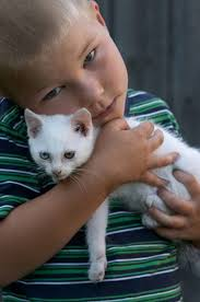 cisapride for cats side effects of the cisapride on cats ehow uk