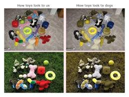 Are Dogs Color Blind Nuzzle Your GPS Pet Tracker