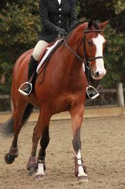 1016 Best Equitation Hunter / Jumper Images On Pinterest   Hunter ... Autumn Hills Farm Pin By 21 Days Diet Plan On Horses Pinterest Horse Hunter Hunters Jumpers Equitation Equestrian Hillmar Farm Welcome Beckett Run Inc About Us News Alabama Association Corrstone Huntjumper Traing Barn In Modesto And Saratoga Holiday Giving Equestrian Style The Peeps Foundation Is The 744 Best Hunter Jumpershow Jumping Images Florida Jumper Show Barns Med Kennedy Grove Stables Tommi Clark Chosenbrook Show Jumper Sale