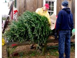 Pinecrest Christmas Tree Farm by Where You Can Buy Your Christmas Tree Locally Tiverton Ri Patch