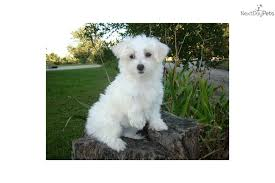 No Shed Small Dogs by 28 Non Shedding Dogs Uk List Of Dogs That Do Not Shed Low