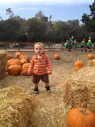 Pumpkin Patch With Petting Zoo by The Practically Perfect Baby Find The Fun In Fall With Your Baby