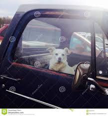 Dog In An Old Pickup Truck. Stock Image - Image Of Truck, Looking ... A Food Truck For Pets Is Coming To Boston Magazine Dogs Die Falling Off Pickup Trucks Trucking With A Dog What Drivers Should Know About Furry Pickups Pickup Truck Dog Rudy Photograph By Tara Cantore Blue Wall Art Bromi Design Pick Up Pal Cool Stuff Driving Behind The Steering Wheel Of Lorry Stock Debbis Front Porch Dawgz The Dangers In Beds 1800petmeds Cares Novel Four Bites Hc Thrifty Teachers